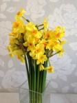 Delightful Daffodil